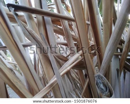 dry leaves in the dry season