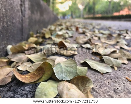 Dry Leaves on ground, leaves fall on street. #1299211738