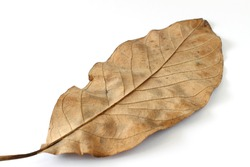 Dry leaves on white background