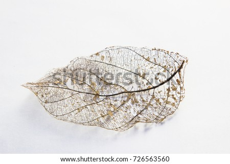 Dry leaves on white textures background.dried pattern outdoor dead plant branch nature.leafs flora white yellow stem symbol macro old color detail back cover