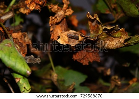 dry leaves with the combination of awesome colors #729588670