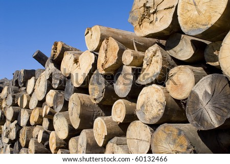 dry logs stacked lumber plant
