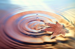Dry marple leaf on water surface, rings from water drops. Toned Fall background