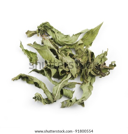 Dry mint isolated on white
