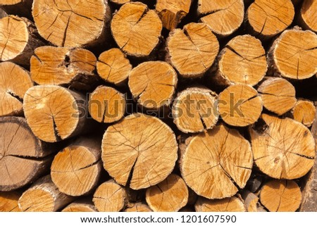 Dry oak firewood stacked in a pile, not chopped whole wood for winter heating fireplace. Natural wood background.