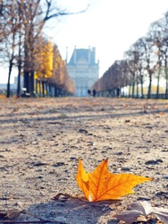 Dry orange leave in park near Louvre museum, Paris