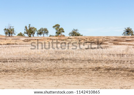 Dry paddock after wheat harvest with trees on rocky rise in background