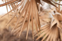 dry palm leaf in palm forest