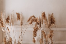 dry pampas grass decor along the beige wall parquet floor in the room place text copy space