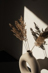 Dry pampas grass / reed stalks bouquet in stylish round vase. Shadows on the wall. Silhouette in sunlight.