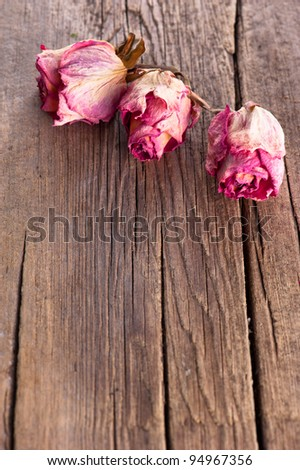Dry pink roses on old wooden background
