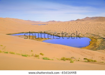 Dry plant in desert lake