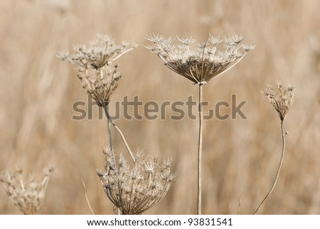 dry plants, autumnal meadow