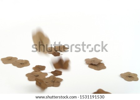 Dry pressed flowers which some is in falling some, some is in focus selected and all are isolated on white background.
