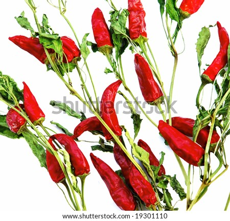 Dry red hot chilly papers plants over white