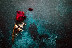 Dry red rose isolated on blue, rustic background. Copy space