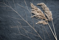 Dry reed and a thin graceful branch on a black textured background. Golden reed grass. Abstract natural background in neutral monochrome colors. Minimalistic, trendy concept. Copy space.