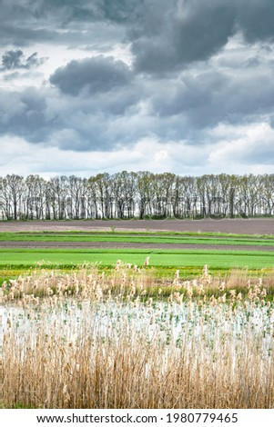 Dry reeds above the water in stormy weather. Lake shore overgrown with dry reeds and trees on the horizon in the spring. Reclamation and Environment.  Stockfoto ©