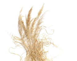Dry reeds and grass isolated on white background. Abstract pile of dry herbs, hay or straw.