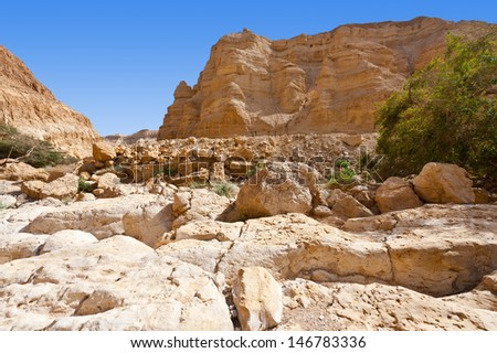 Dry Riverbed in the Judean Desert