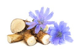 Dry roots of chicory and cichorium flowers isolated on white background. Common chicory or Cichorium intybus flowers. Isolated on white.