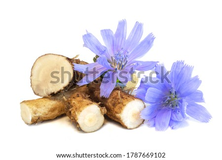Dry roots of chicory and cichorium flowers isolated on white background. Common chicory or Cichorium intybus flowers. Isolated on white. Foto stock ©