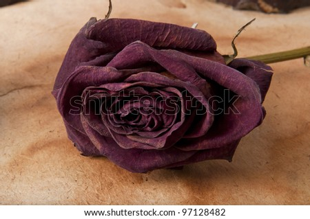 dry rose on the old background