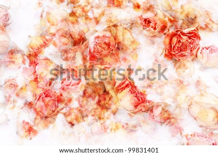 Dry roses beautiful, dreamy artistic background