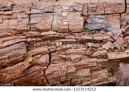 Dry rot or brown rot is a wood-decay fungus, showing a brown discoloration, and cracks into roughly cubical pieces, a phenomenon termed cubical fracture. Photo stock ©