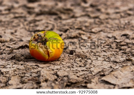 Dry soil closeup before rain with fruit