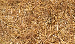 Dry straw background - Natural background