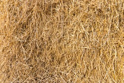 Dry straw surface. Reeds background and texture.