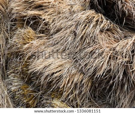 Dry straw texture #1336081151