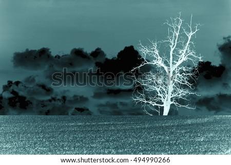 dry tree in dark tone for...