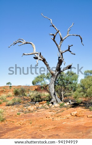 Dry tree in Kings canyon in Australia