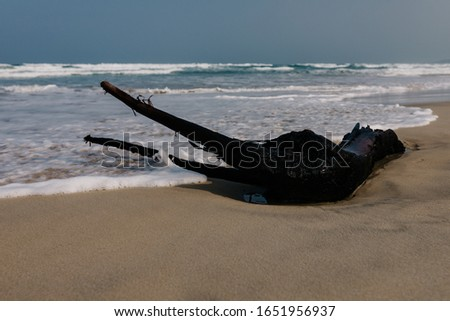 Dry tree, the root lies on the shore of a sandy empty beach, empty beach, small waves, blue sky, background