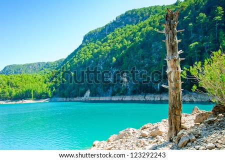 Dry tree trunk on the shore of a mountain lake