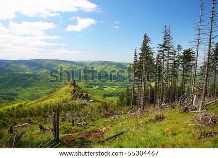 dry trees, Jesenik, Czech Republic