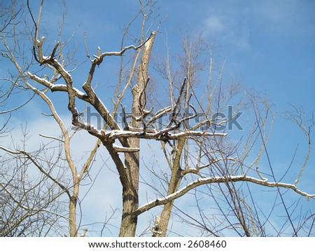 dry trees on blue sky