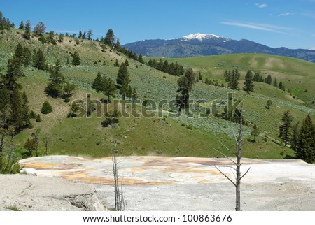 Dry trees on white grounds with green hills and high Rockies, Yellowstone National Park, Wyoming