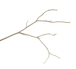 Dry twigs isolated on a white background, perfect for presentations.