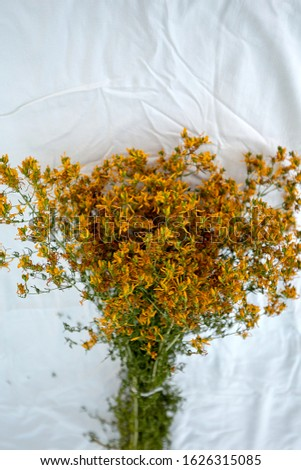 Dry twigs of St. John's wort as a bunch on white cloth background. The herb known also as Hypericum Perforatum. Dried medicinal herbs. Alternative medicine. Folk medicine.