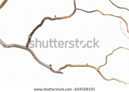 Dry twigs on a white background. #604508105