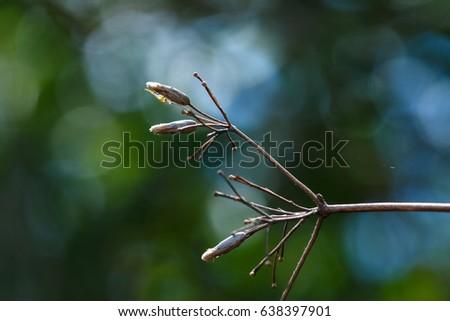 Dry twigs, twigs. #638397901