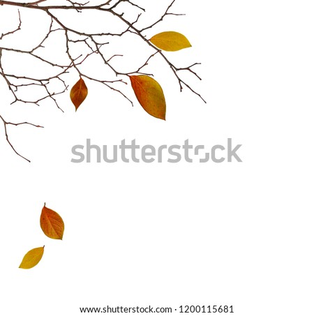 Dry twigs with colorful leaves in a corner autumn arrangement isolated on white background