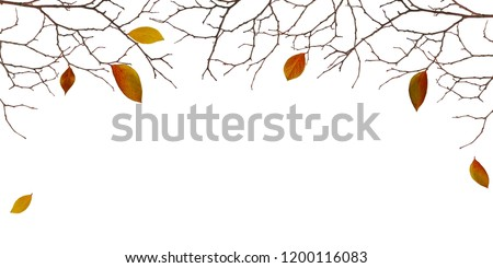 Dry twigs with colorful leaves isolated on white background. Autumn concept. #1200116083