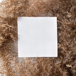Dry weeds for home decor, field plants, fluffy grass, white background, copy space, natural texture, background, copy space, flat lay, Greeting card with sequins for the inscription, a blank square