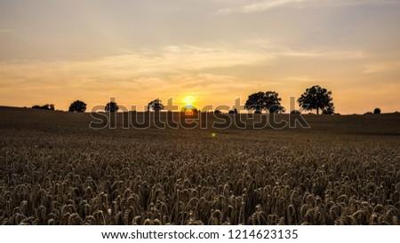 Dry wheat field #1214623135