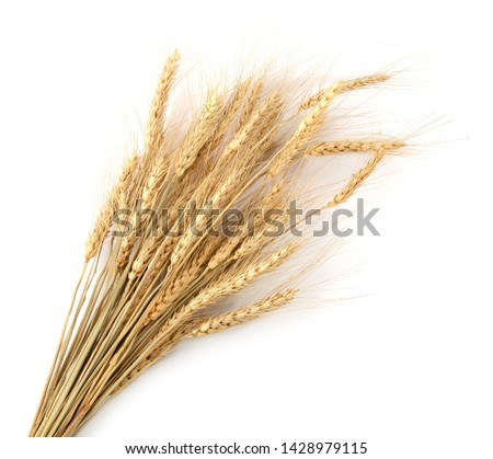 Dry wheat grains branch isolated on white background table top view #1428979115