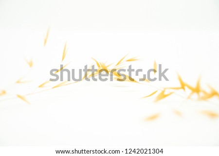 Dry wheat without seeds, dry plant on a pile with spikes on a white background. Digestive and healthy food. #1242021304